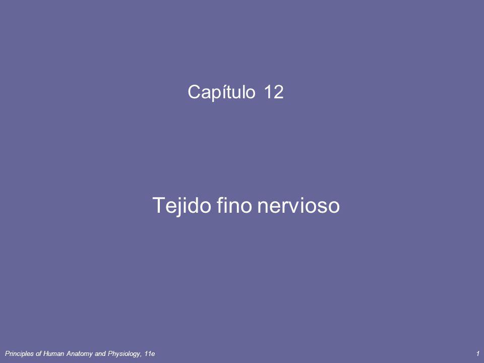 Principles of Human Anatomy and Physiology, 11e52 Conducción Salutatory La conducción del impulso nervioso en el que el impulso salta de nodo a nodo