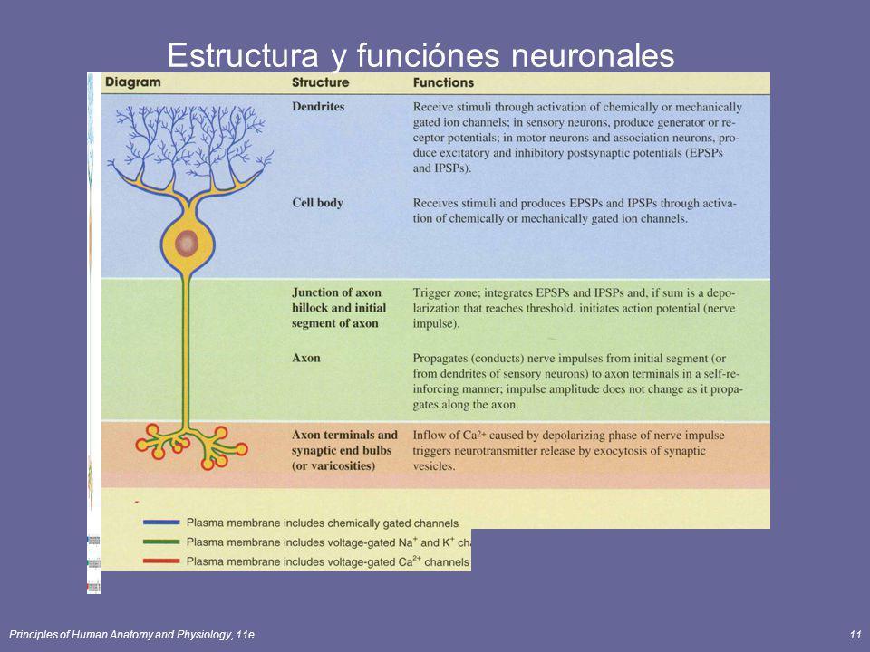 Principles of Human Anatomy and Physiology, 11e11 Estructura y funciónes neuronales