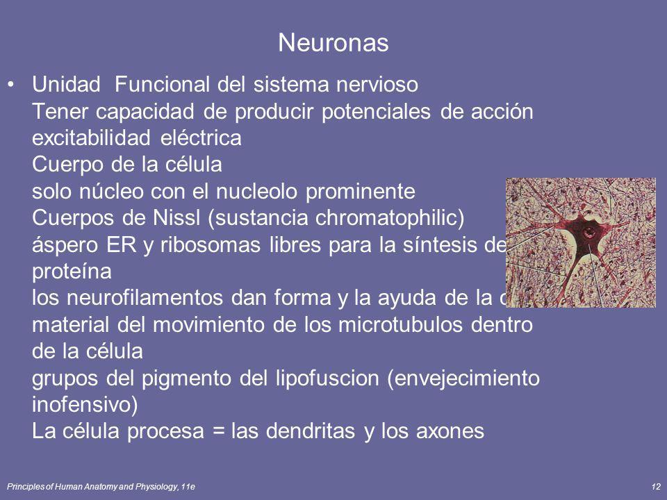 Principles of Human Anatomy and Physiology, 11e12 Neuronas Unidad Funcional del sistema nervioso Tener capacidad de producir potenciales de acción exc