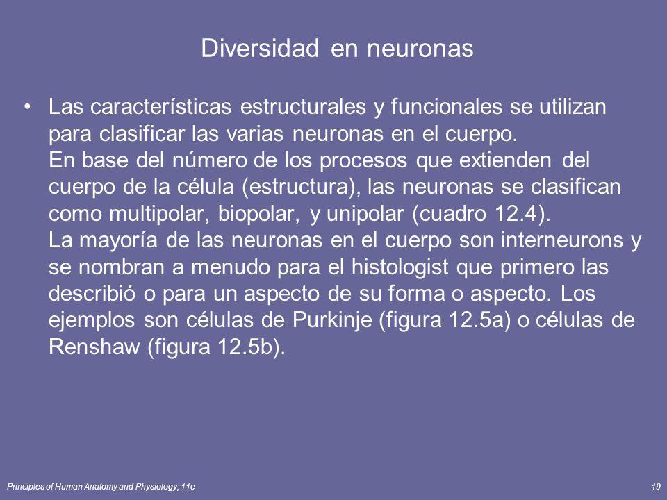 Principles of Human Anatomy and Physiology, 11e19 Diversidad en neuronas Las características estructurales y funcionales se utilizan para clasificar l