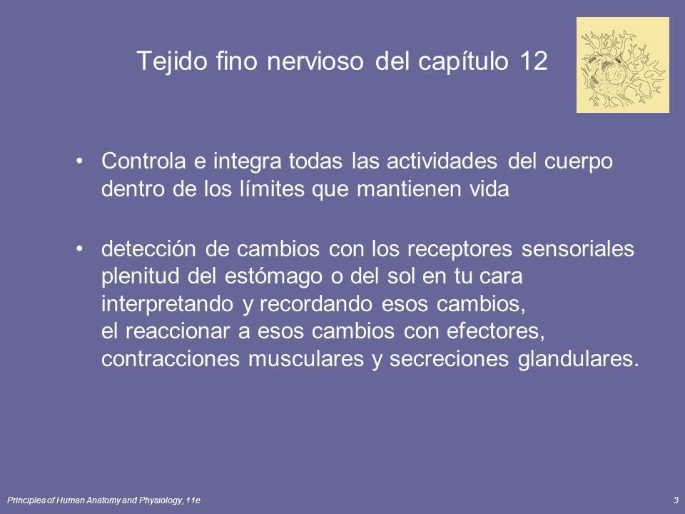 Principles of Human Anatomy and Physiology, 11e3 Tejido fino nervioso del capítulo 12 Controla e integra todas las actividades del cuerpo dentro de lo