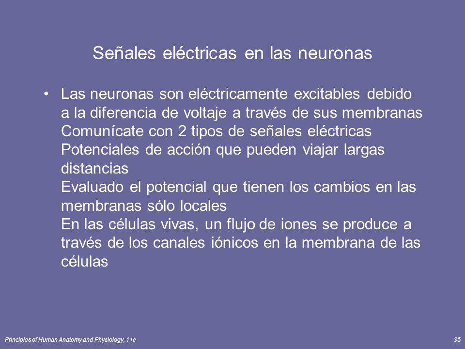 Principles of Human Anatomy and Physiology, 11e35 Señales eléctricas en las neuronas Las neuronas son eléctricamente excitables debido a la diferencia