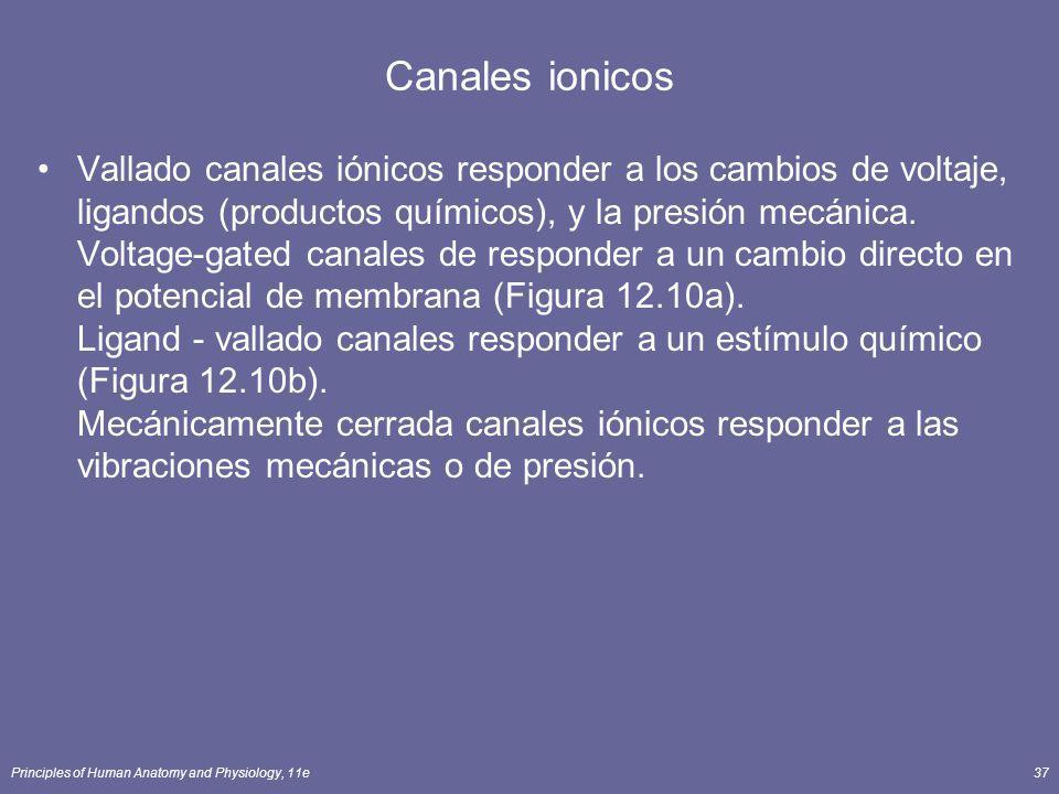 Principles of Human Anatomy and Physiology, 11e37 Canales ionicos Vallado canales iónicos responder a los cambios de voltaje, ligandos (productos quím
