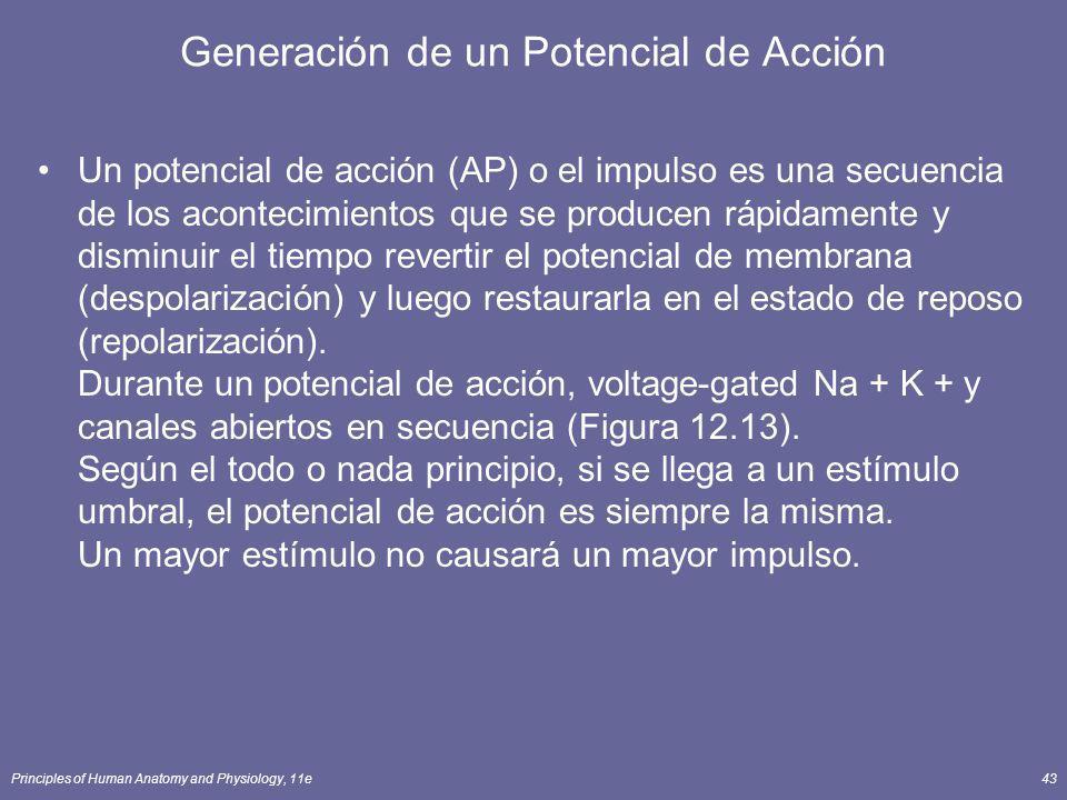 Principles of Human Anatomy and Physiology, 11e43 Generación de un Potencial de Acción Un potencial de acción (AP) o el impulso es una secuencia de lo
