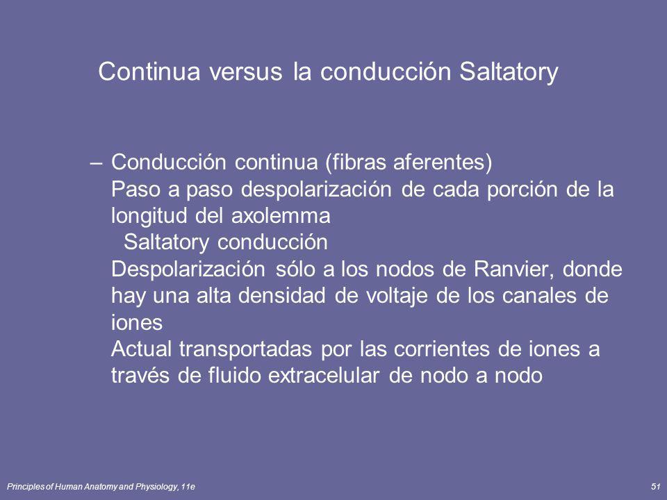 Principles of Human Anatomy and Physiology, 11e51 Continua versus la conducción Saltatory –Conducción continua (fibras aferentes) Paso a paso despolar