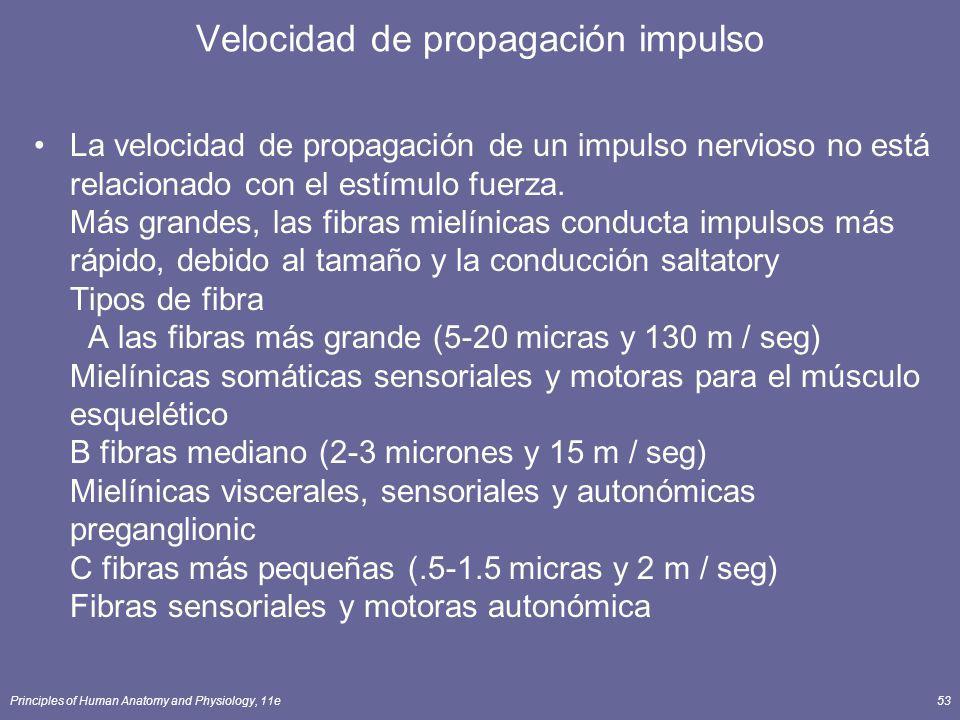 Principles of Human Anatomy and Physiology, 11e53 Velocidad de propagación impulso La velocidad de propagación de un impulso nervioso no está relacion