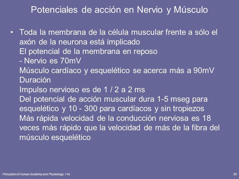 Principles of Human Anatomy and Physiology, 11e55 Potenciales de acción en Nervio y Músculo Toda la membrana de la célula muscular frente a sólo el ax