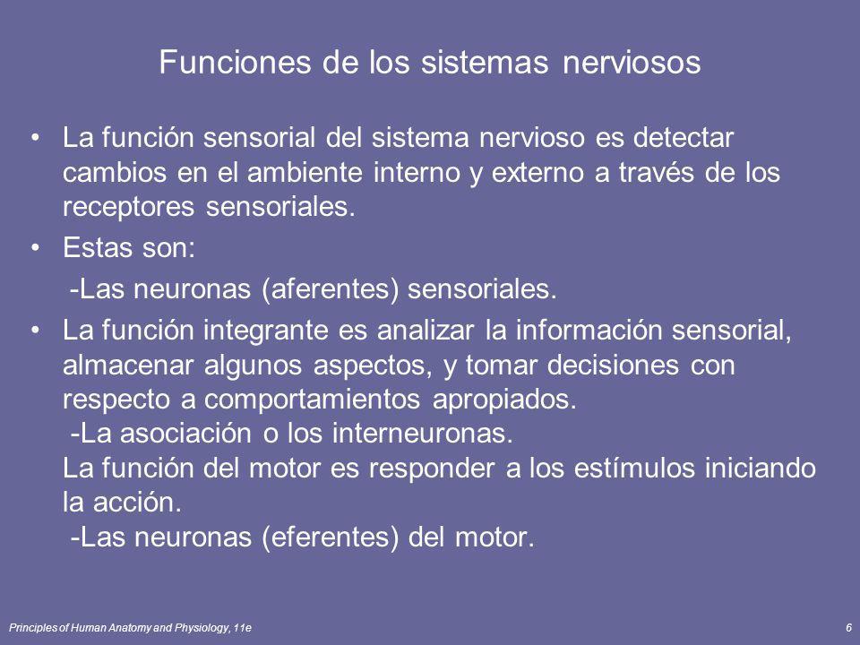 Principles of Human Anatomy and Physiology, 11e6 Funciones de los sistemas nerviosos La función sensorial del sistema nervioso es detectar cambios en