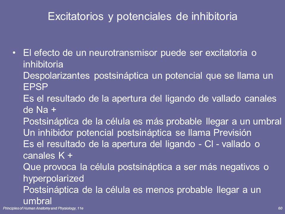 Principles of Human Anatomy and Physiology, 11e60 Excitatorios y potenciales de inhibitoria El efecto de un neurotransmisor puede ser excitatoria o in