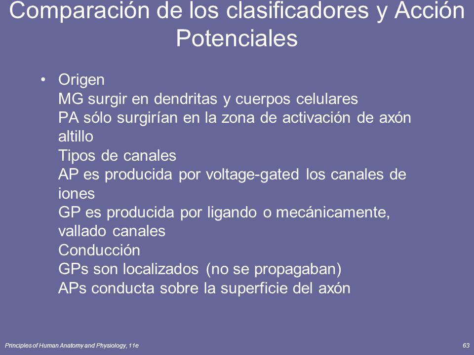 Principles of Human Anatomy and Physiology, 11e63 Origen MG surgir en dendritas y cuerpos celulares PA sólo surgirían en la zona de activación de axón