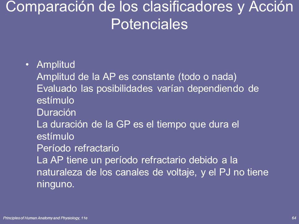 Principles of Human Anatomy and Physiology, 11e64 Comparación de los clasificadores y Acción Potenciales Amplitud Amplitud de la AP es constante (todo