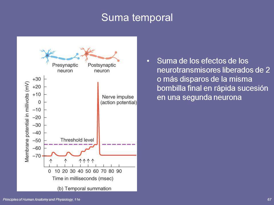 Principles of Human Anatomy and Physiology, 11e67 Suma temporal Suma de los efectos de los neurotransmisores liberados de 2 o más disparos de la misma