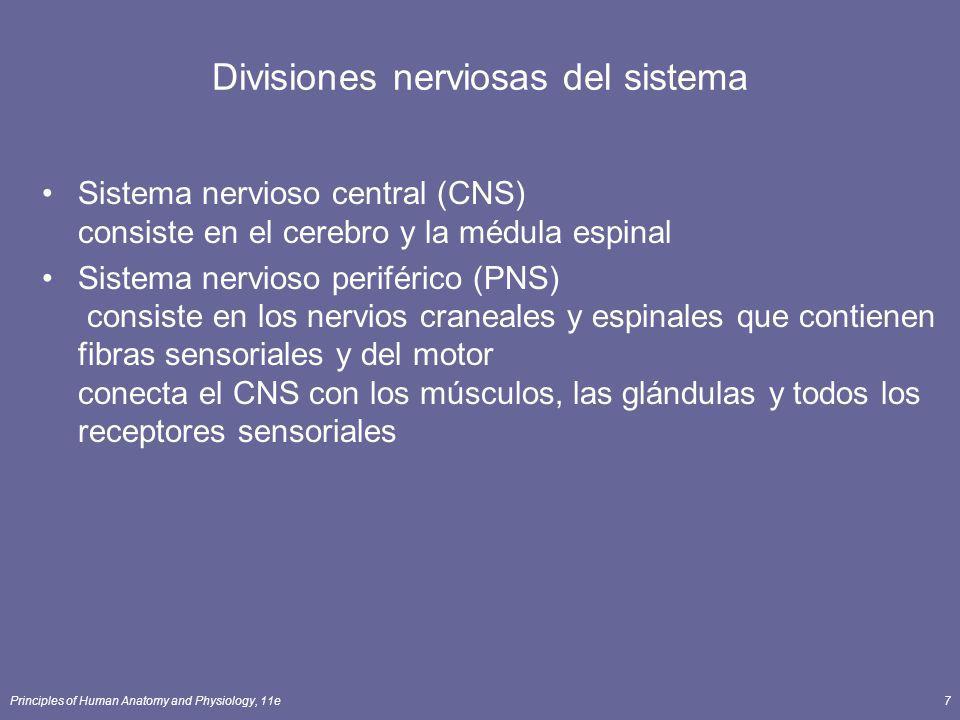 Principles of Human Anatomy and Physiology, 11e8 Subdivisiones del PNS Sistema nervioso (voluntario) somático (SNS) neuronas de los receptores sensoriales cutáneos y especiales al CNS neuronas del motor al tejido fino del músculo esquelético Sistemas nerviosos (involuntarios) autonómicos neuronas sensoriales de órganos viscerales al CNS viajar en automóvil las neuronas para alisar y músculo cardiaco y las glándulas división comprensiva (aceleró ritmo cardíaco) división parasimpática (ritmo cardíaco de la desaceleración) Sistema nervioso entérico (ENS) las neuronas sensoriales y del motor involuntarias controlan la zona del SOLDADO ENROLADO EN EL EJÉRCITO las neuronas funcionan independientemente del CNS.