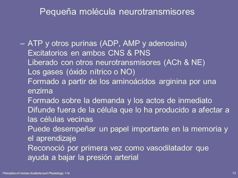 Principles of Human Anatomy and Physiology, 11e73 –ATP y otros purinas (ADP, AMP y adenosina) Excitatorios en ambos CNS & PNS Liberado con otros neuro