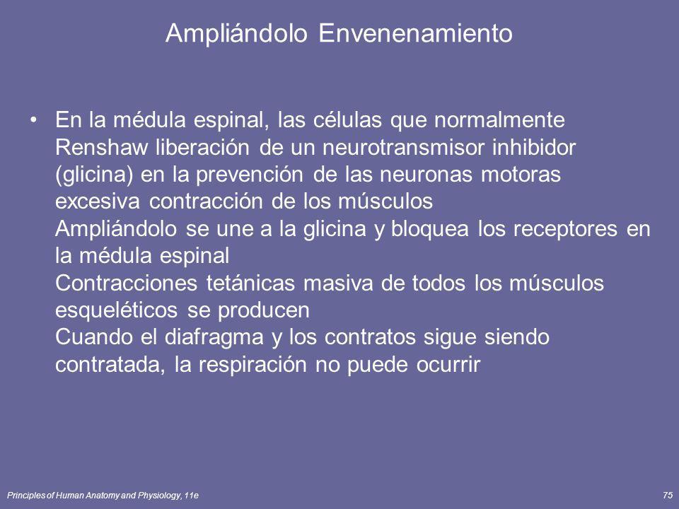 Principles of Human Anatomy and Physiology, 11e75 Ampliándolo Envenenamiento En la médula espinal, las células que normalmente Renshaw liberación de u