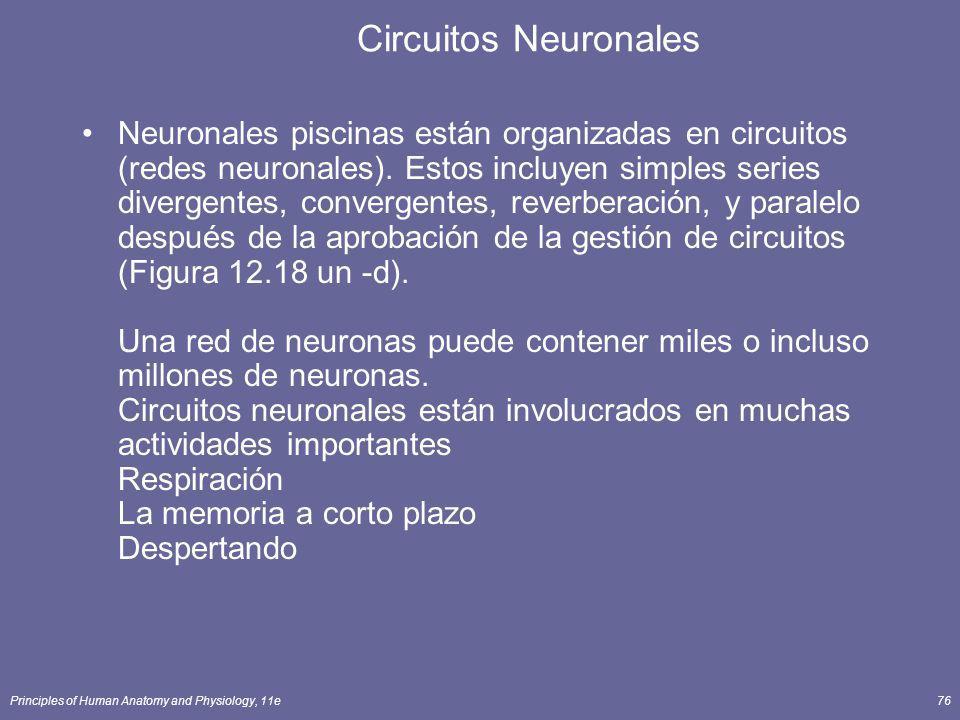 Principles of Human Anatomy and Physiology, 11e76 Circuitos Neuronales Neuronales piscinas están organizadas en circuitos (redes neuronales). Estos in