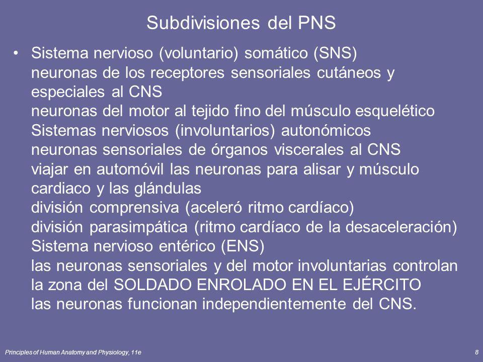Principles of Human Anatomy and Physiology, 11e9 Organización del sistema nervioso El CNS es cerebro y médula espinal PNS es todo, menos lo que conforma el CNS