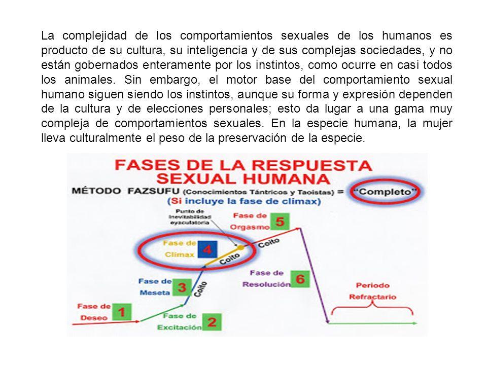 La complejidad de los comportamientos sexuales de los humanos es producto de su cultura, su inteligencia y de sus complejas sociedades, y no están gob