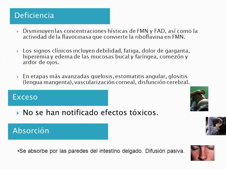 Deficiencia Exceso Disminuyen las concentraciones hísticas de FMN y FAD, así como la actividad de la flavocinasa que convierte la riboflavina en FMN.
