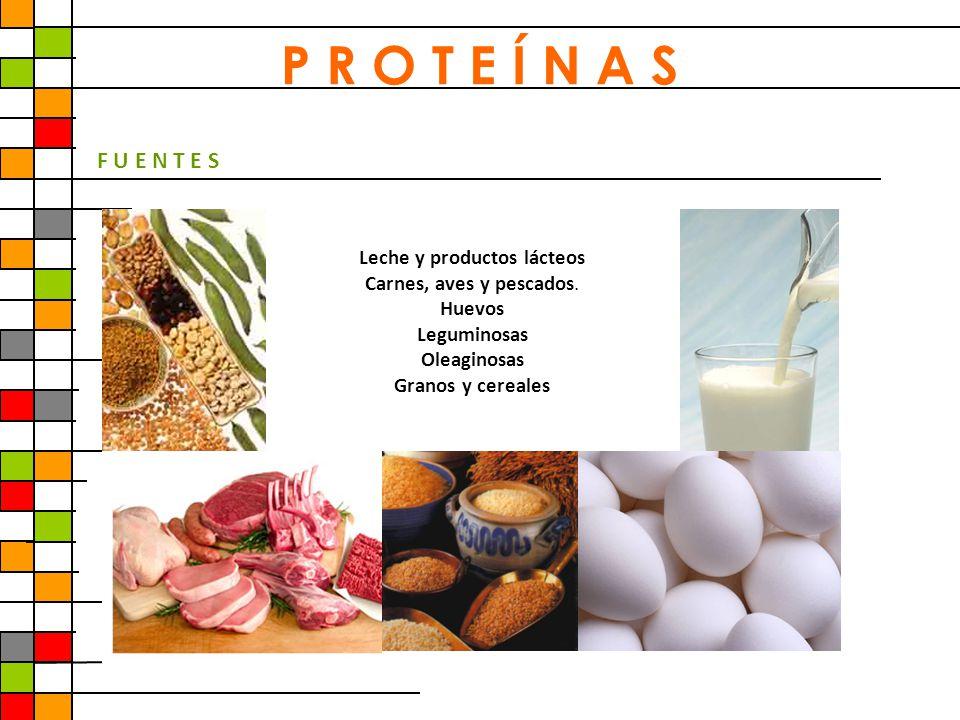 P R O T E Í N A S F U E N T E S Leche y productos lácteos Carnes, aves y pescados. Huevos Leguminosas Oleaginosas Granos y cereales