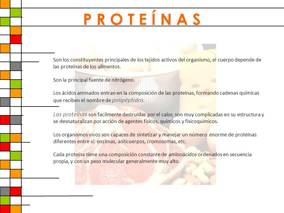 Son los constituyentes principales de los tejidos activos del organismo, el cuerpo depende de las proteínas de los alimentos. Son la principal fuente