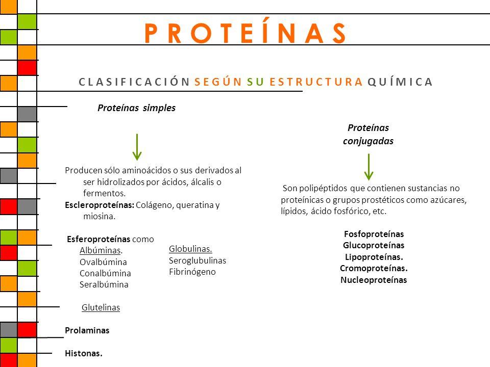 C L A S I F I C A C I Ó N S E G Ú N S U E S T R U C T U R A Q U Í M I C A Proteínas simples Proteínas conjugadas Producen sólo aminoácidos o sus deriv