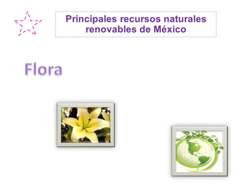 Principales recursos naturales renovables de México