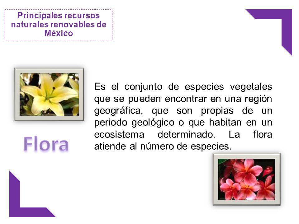 Es el conjunto de especies vegetales que se pueden encontrar en una región geográfica, que son propias de un periodo geológico o que habitan en un eco