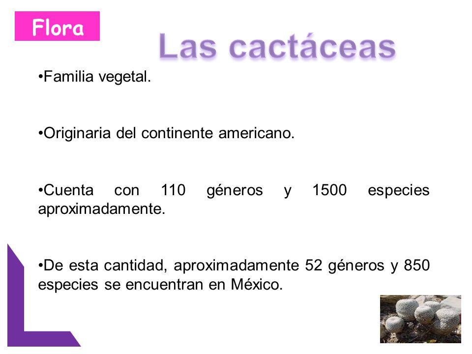 Flora Lo que coloca a México como el país con mayor variedad y riqueza de cactáceas a nivel mundial.