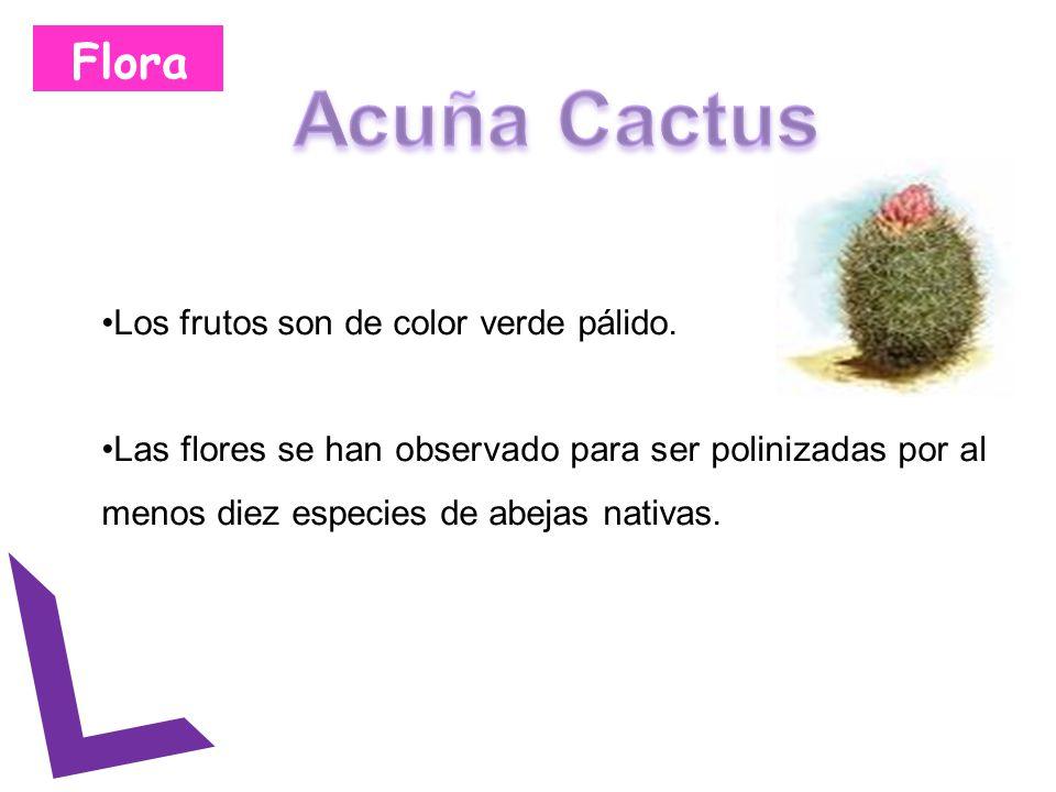 Flora Los frutos son de color verde pálido. Las flores se han observado para ser polinizadas por al menos diez especies de abejas nativas.