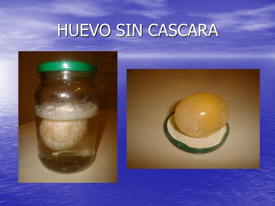 Análisis Al frotar suavemente el huevo la cáscara se habrá disuelto y sólo quedará una membrana que contiene todas las partes del huevo en su interior.