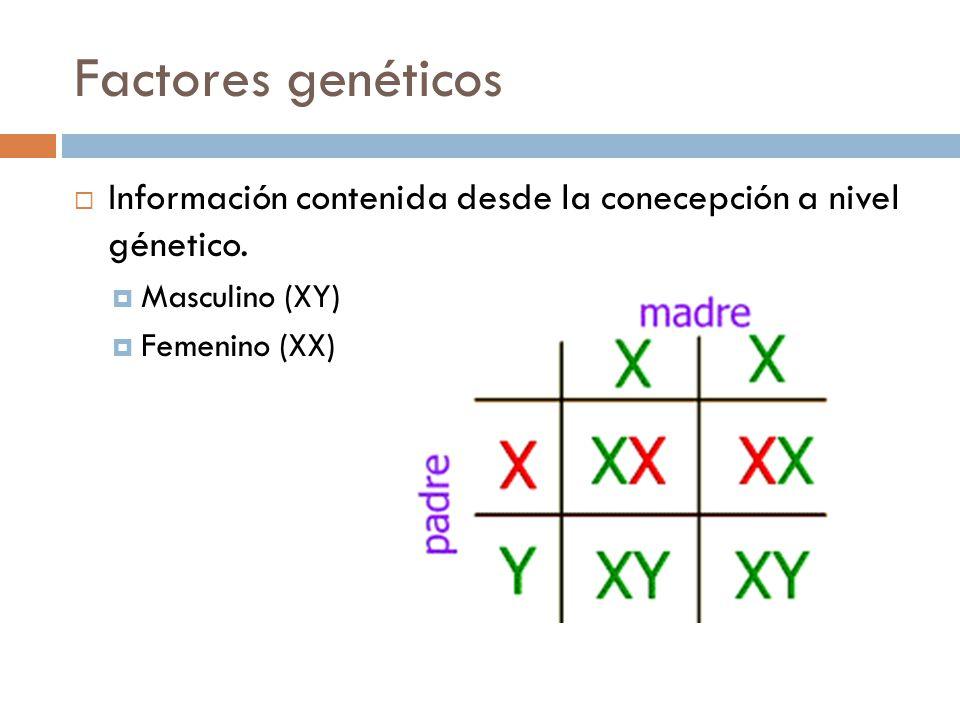 Factores genéticos Información contenida desde la conecepción a nivel génetico. Masculino (XY) Femenino (XX)