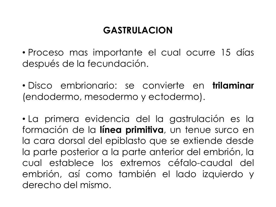 GASTRULACION Proceso mas importante el cual ocurre 15 días después de la fecundación.