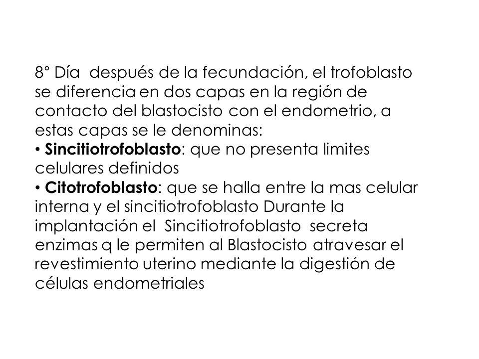 8° Día después de la fecundación, el trofoblasto se diferencia en dos capas en la región de contacto del blastocisto con el endometrio, a estas capas se le denominas: Sincitiotrofoblasto : que no presenta limites celulares definidos Citotrofoblasto : que se halla entre la mas celular interna y el sincitiotrofoblasto Durante la implantación el Sincitiotrofoblasto secreta enzimas q le permiten al Blastocisto atravesar el revestimiento uterino mediante la digestión de células endometriales