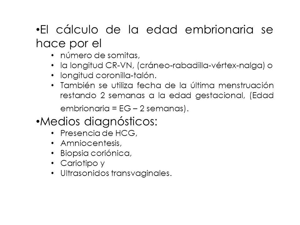 El cálculo de la edad embrionaria se hace por el número de somitas, la longitud CR-VN, (cráneo-rabadilla-vértex-nalga) o longitud coronilla-talón.