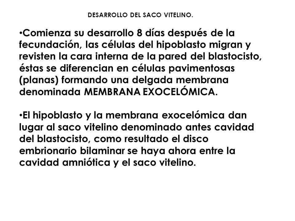 DESARROLLO DEL SACO VITELINO.