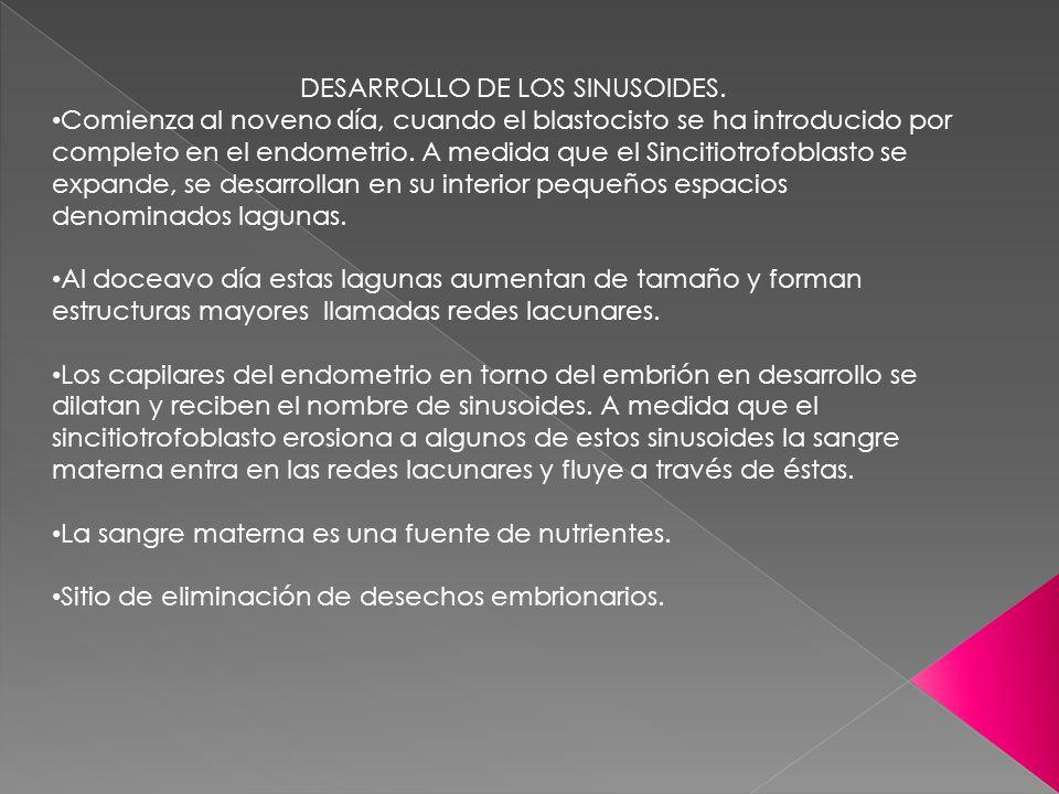 DESARROLLO DE LOS SINUSOIDES. Comienza al noveno día, cuando el blastocisto se ha introducido por completo en el endometrio. A medida que el Sincitiot