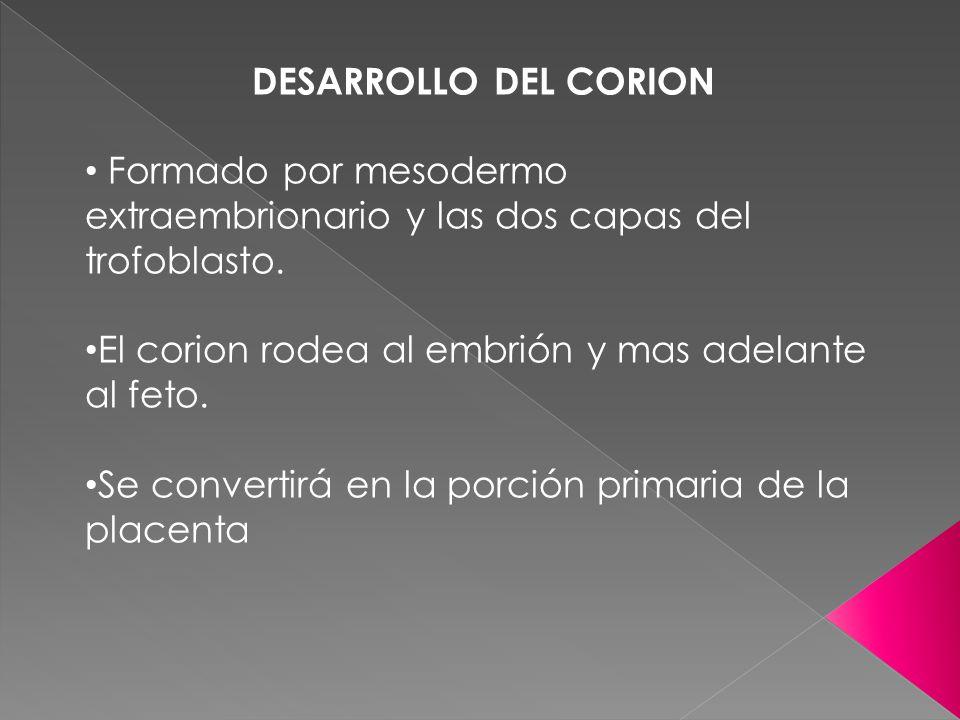 DESARROLLO DEL CORION Formado por mesodermo extraembrionario y las dos capas del trofoblasto. El corion rodea al embrión y mas adelante al feto. Se co