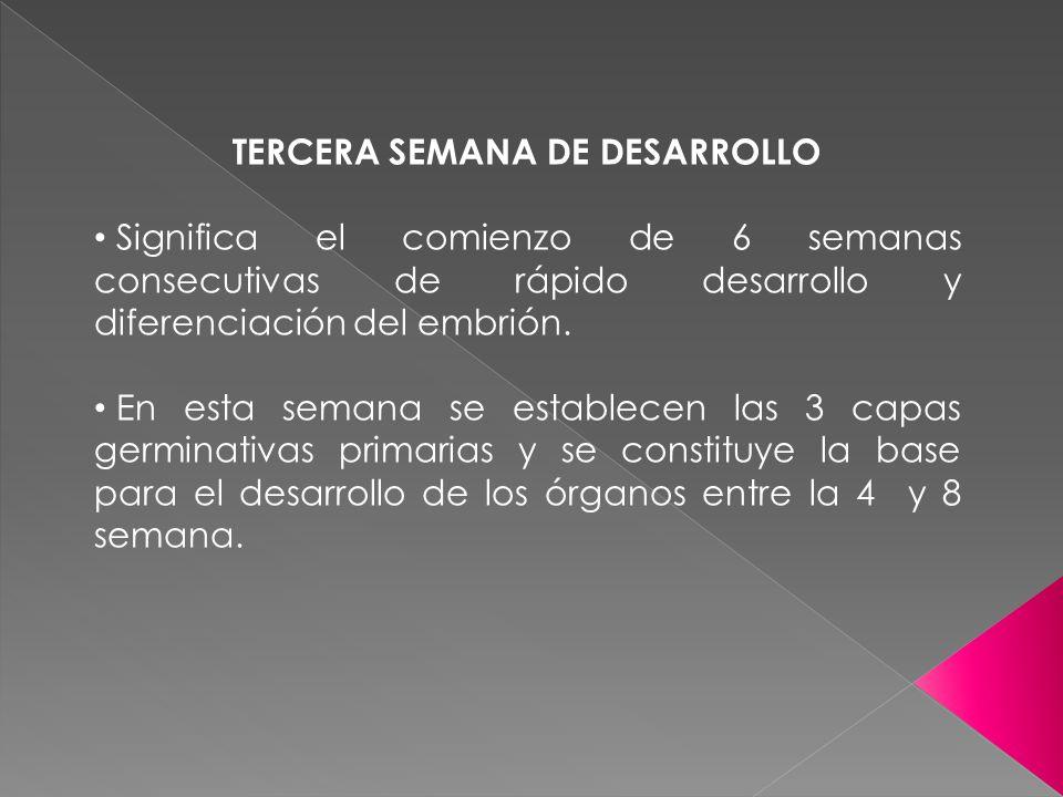 TERCERA SEMANA DE DESARROLLO Significa el comienzo de 6 semanas consecutivas de rápido desarrollo y diferenciación del embrión. En esta semana se esta