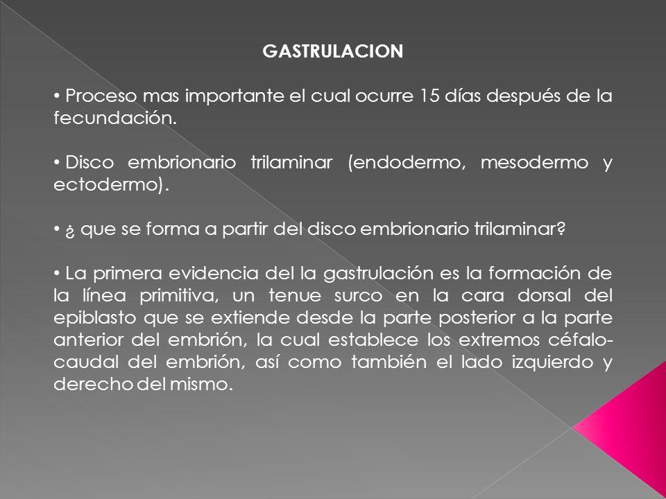GASTRULACION Proceso mas importante el cual ocurre 15 días después de la fecundación. Disco embrionario trilaminar (endodermo, mesodermo y ectodermo).