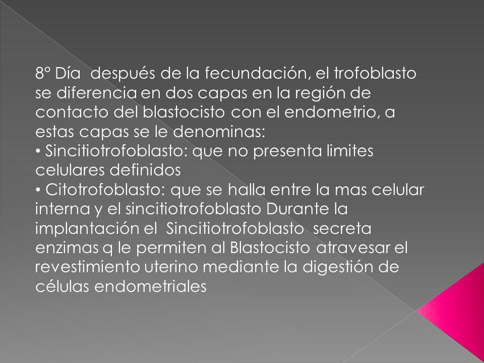 8° Día después de la fecundación, el trofoblasto se diferencia en dos capas en la región de contacto del blastocisto con el endometrio, a estas capas