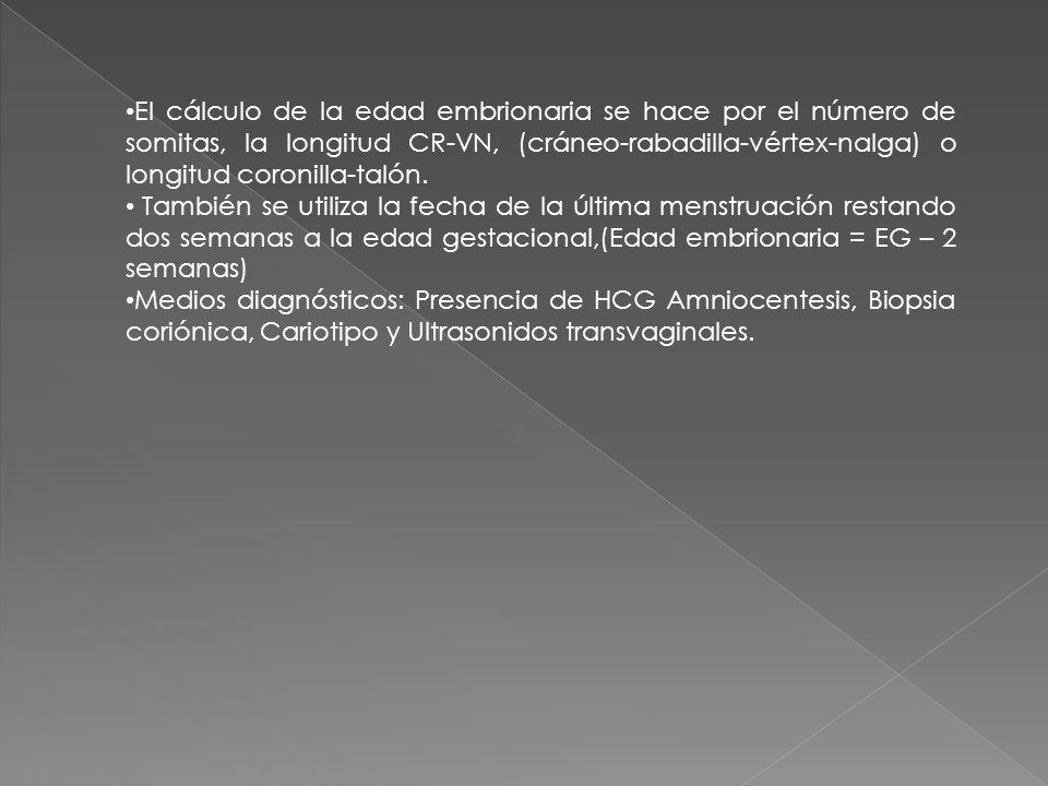 El cálculo de la edad embrionaria se hace por el número de somitas, la longitud CR-VN, (cráneo-rabadilla-vértex-nalga) o longitud coronilla-talón. Tam