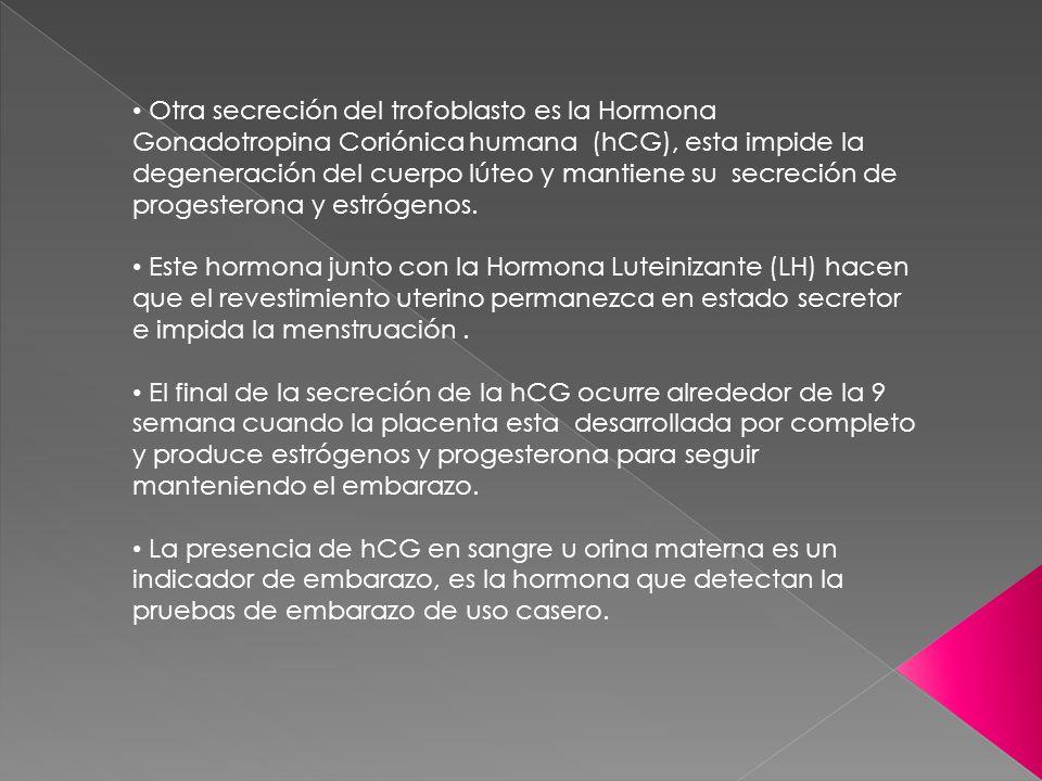 Otra secreción del trofoblasto es la Hormona Gonadotropina Coriónica humana (hCG), esta impide la degeneración del cuerpo lúteo y mantiene su secreció