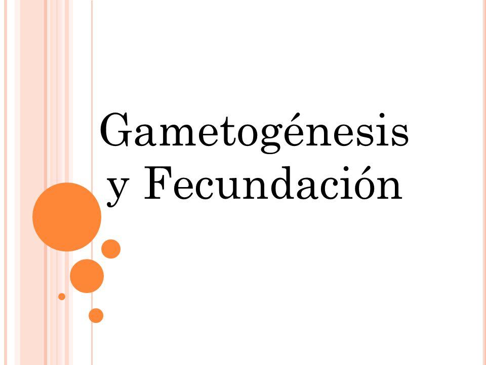Gametogénesis y Fecundación