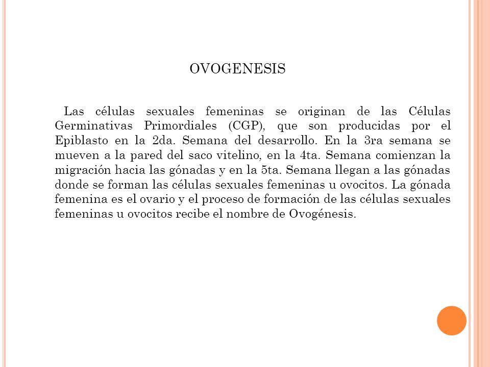 En el ovario las CGP se diferencian en Ovogonias.