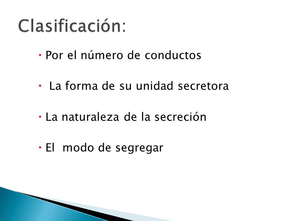 Por el número de conductos La forma de su unidad secretora La naturaleza de la secreción El modo de segregar