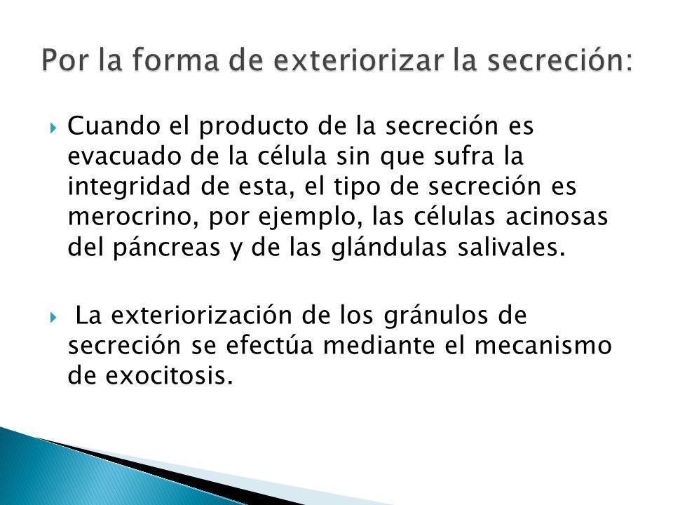 Cuando el producto de la secreción es evacuado de la célula sin que sufra la integridad de esta, el tipo de secreción es merocrino, por ejemplo, las c