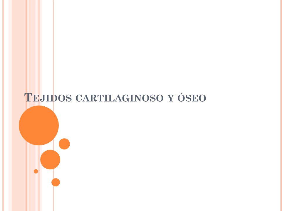 T EJIDO CARTILAGINOSO Es una variedad especial de tejido conjuntivo que esta constituido principalmente por la matriz cartilaginosa, semejante a un gel, en la cual sus células, los condrocitos, se sitúan en pequeñas cavidades denominadas lagunas.