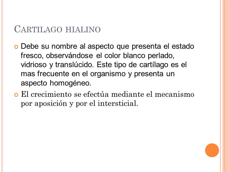 C ARTILAGO HIALINO Debe su nombre al aspecto que presenta el estado fresco, observándose el color blanco perlado, vidrioso y translúcido. Este tipo de
