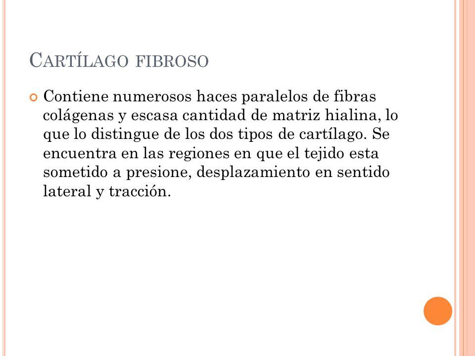 C ARTÍLAGO FIBROSO Contiene numerosos haces paralelos de fibras colágenas y escasa cantidad de matriz hialina, lo que lo distingue de los dos tipos de